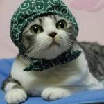 takao さんのプロフィール写真